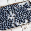Blueberry Varieties