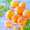 Apricot Nutrition