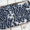 Blueberry Tips