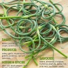 What Goes Well with Garlic Scapes?