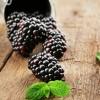 Blackberry Tips