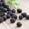 Blackberry Nutrition