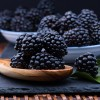 How to Select and Store Blackberries
