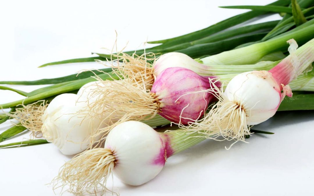 Onion Nutritional Information