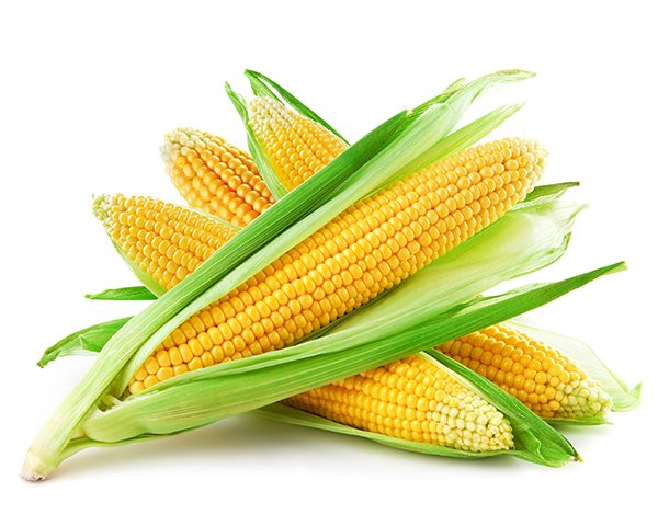 stock photo corn-600