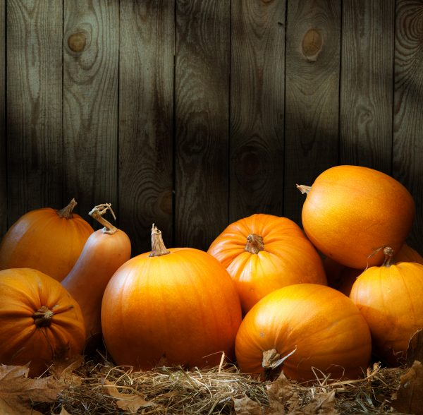 How to store pumpkins