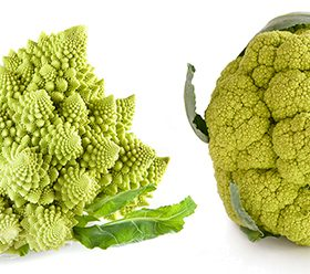 Broccoflower Varieties