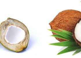 Coconut Varieties