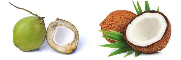 coconut varieties