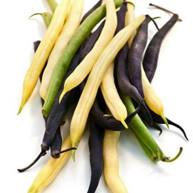 green bean-varieties