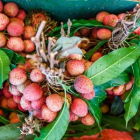 How to Select and Store Lychee