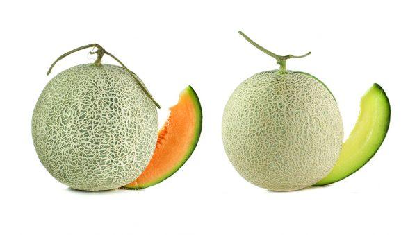 Cantaloupe Varieties