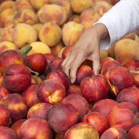 Nectarine Tips