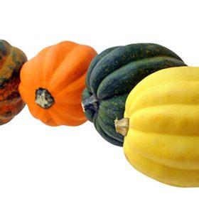 Acorn Squash Varieties