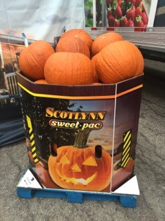 pumpkin bin