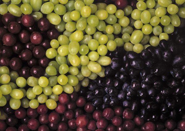 Grape varieties produce made simple - Seedless grape cultivars ...