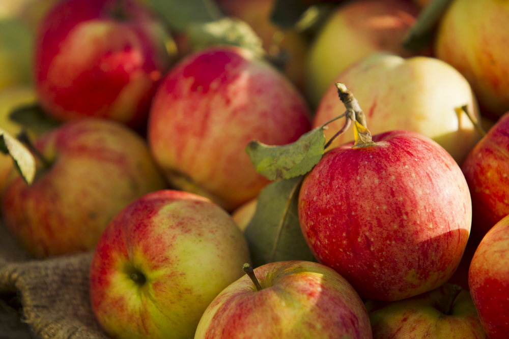 How to Select and Store Apples