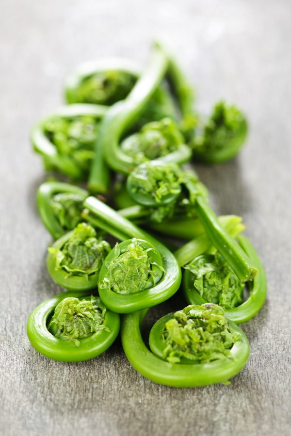 Fiddlehead Nutrition
