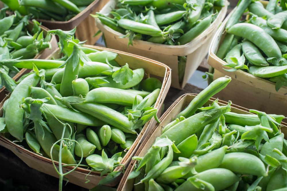Green Pea Varieties