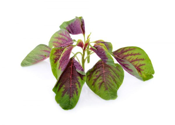 Amaranth Greens