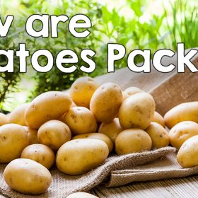 Potatoes are good for you!