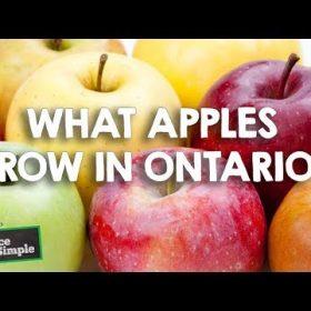 Apple Varieties in Ontario