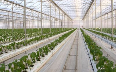 Everything You Need to Know About Ontario Greenhouse Vegetable Growers