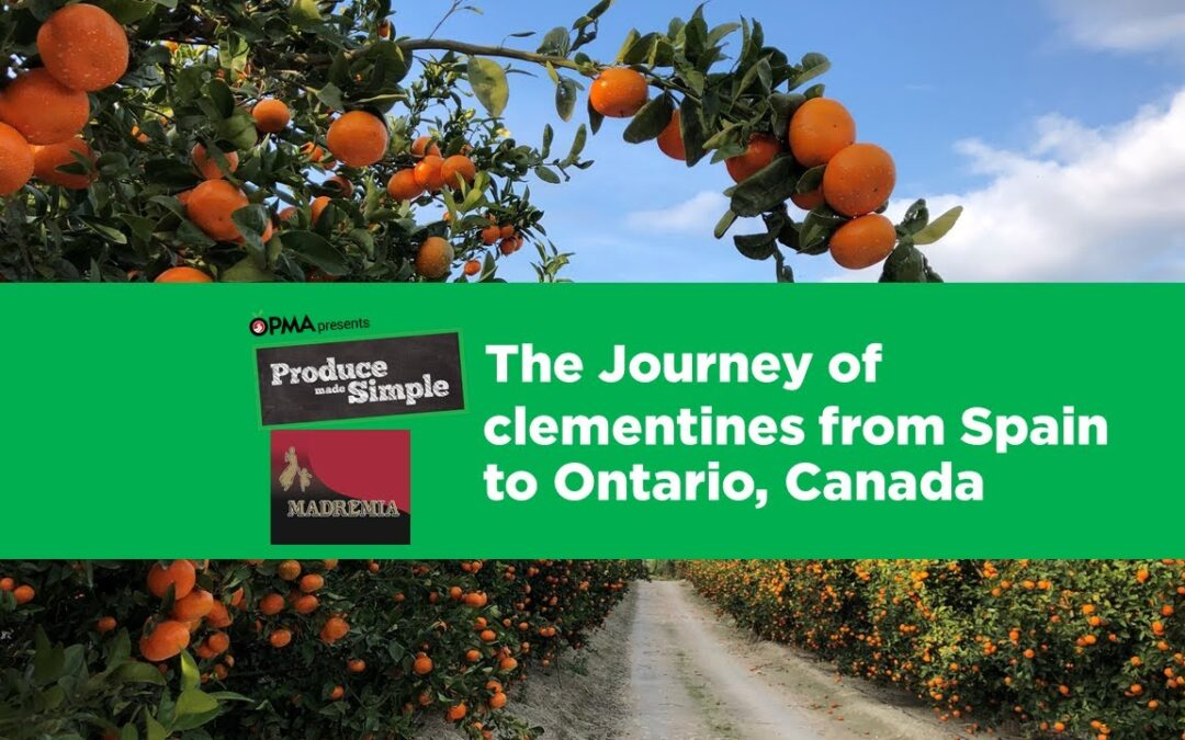 Clementines: Their journey from Spain to Canada